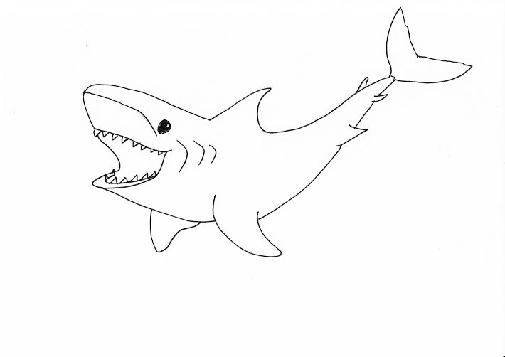 great white sketches