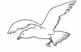 seagull sketches - Copy (3)